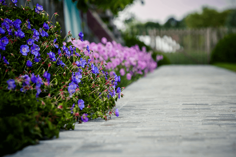 Casteele Tuinen - Tuin, groenwerken, verharding, terras, oprit, wandelpad, planten, bloemen, beplanting - Hoekstraat Deerlijk