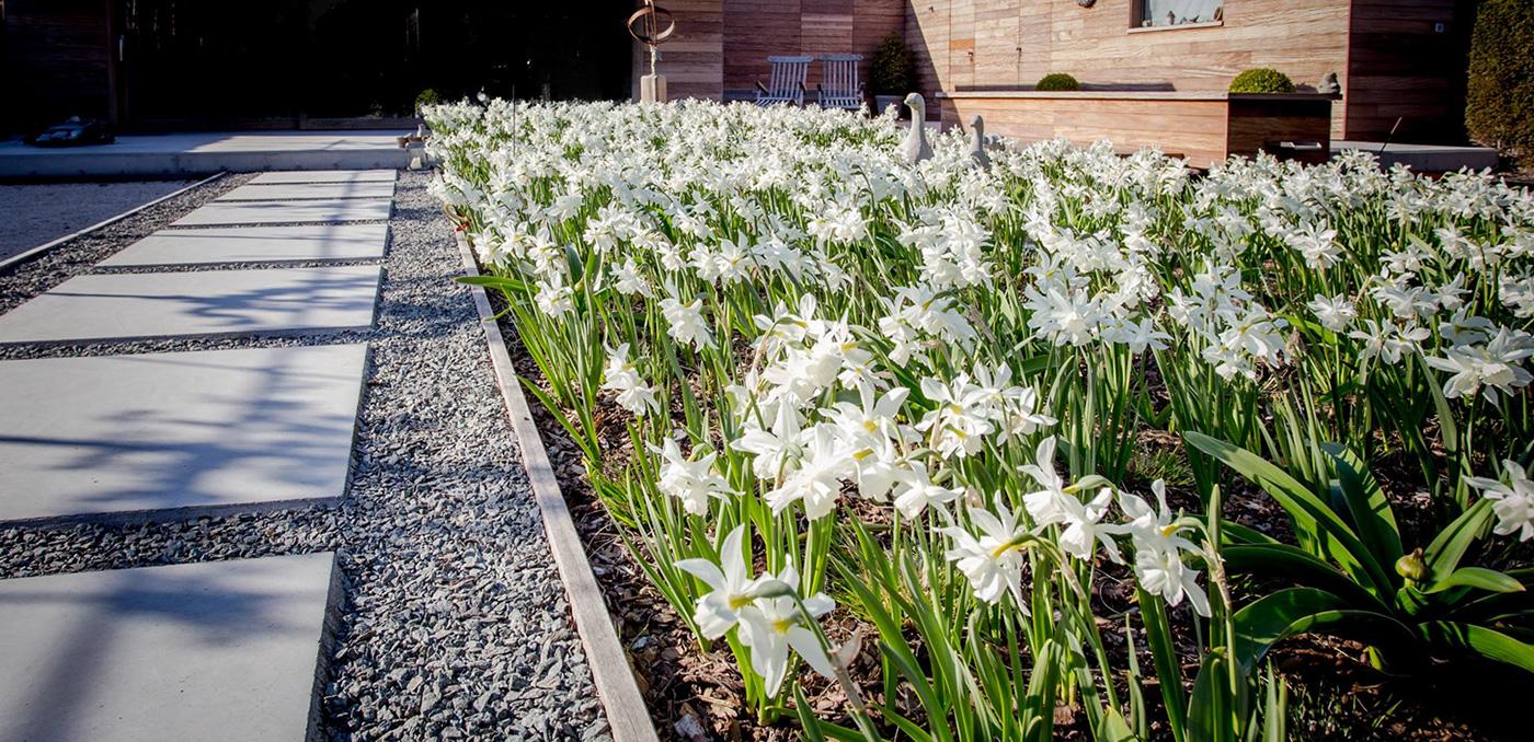 Casteele tuinen - Tuin en terras - Verharding en groenwerken - Haag, scheren, planten, bloeien, bloemen