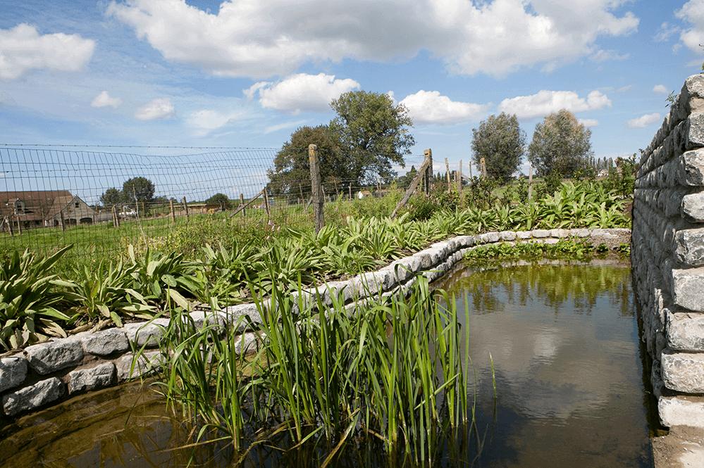 Casteele Tuinen - tuin, groenwerken, verharding, terras, wandelpad, pad, tegels, oprit, vijver, planten, beplanting, bloemen, snoeien, onderhoud - Landelijke tuin Tiegem 5